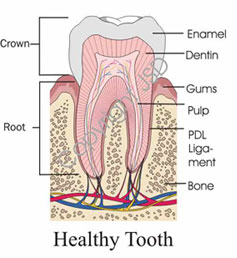 healthytooth